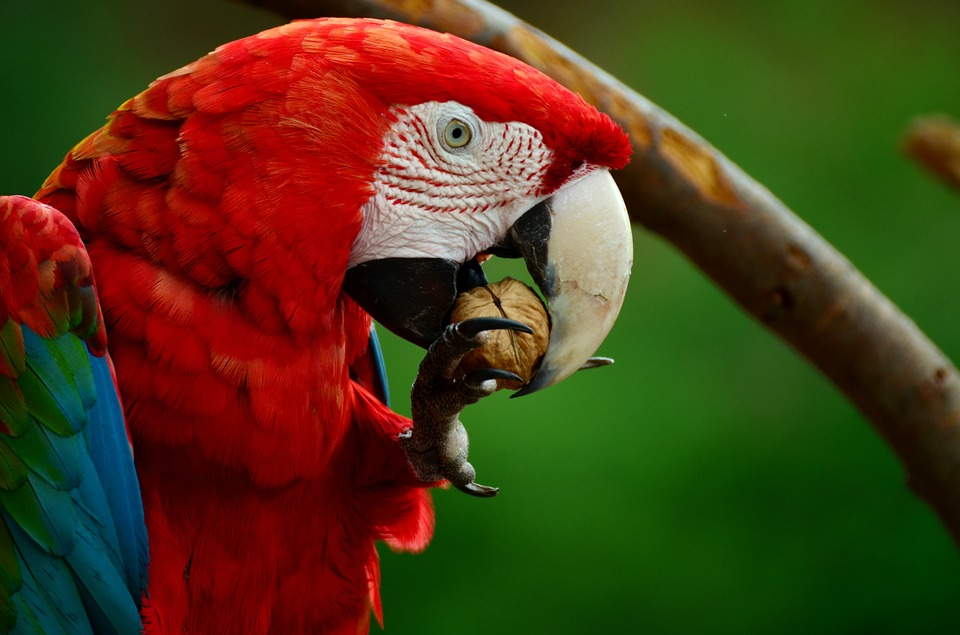 Belize Birding Adventures