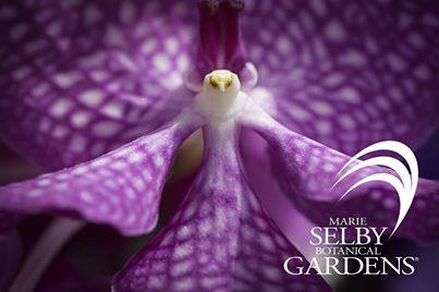Marie Selby Botanical Gardens partners with Caves Branch Botanical Garden