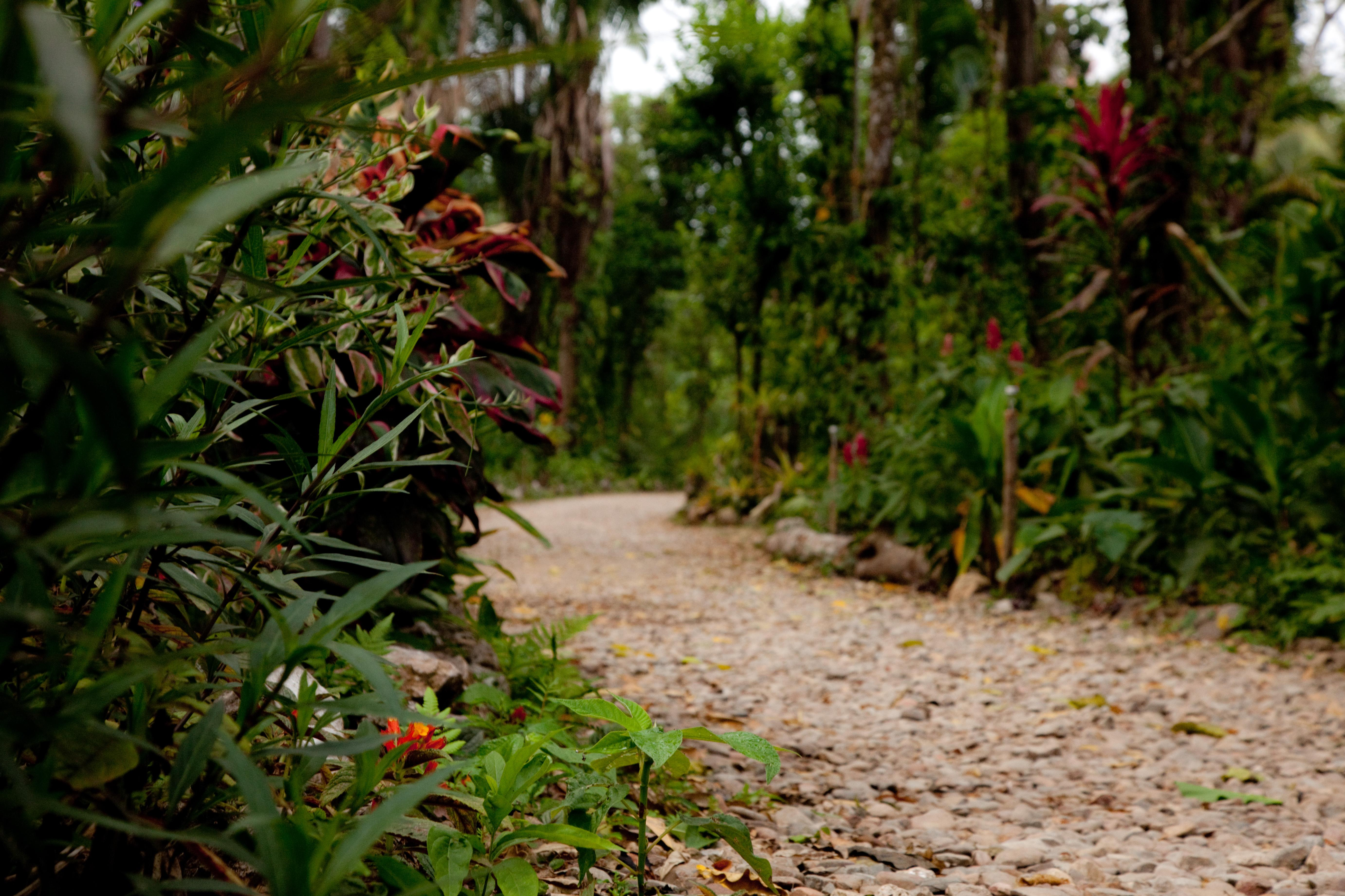 Belize's Epic Adventures & Garden of Eden