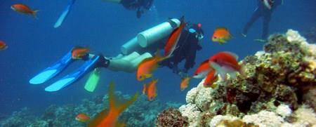 Dive Belize – PADI, NAUI, SSI, NSADS & more