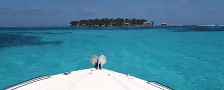 "The ""Meso Amazing Reef"""